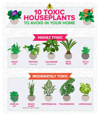 Ten Toxic House Plants To Avoid  image