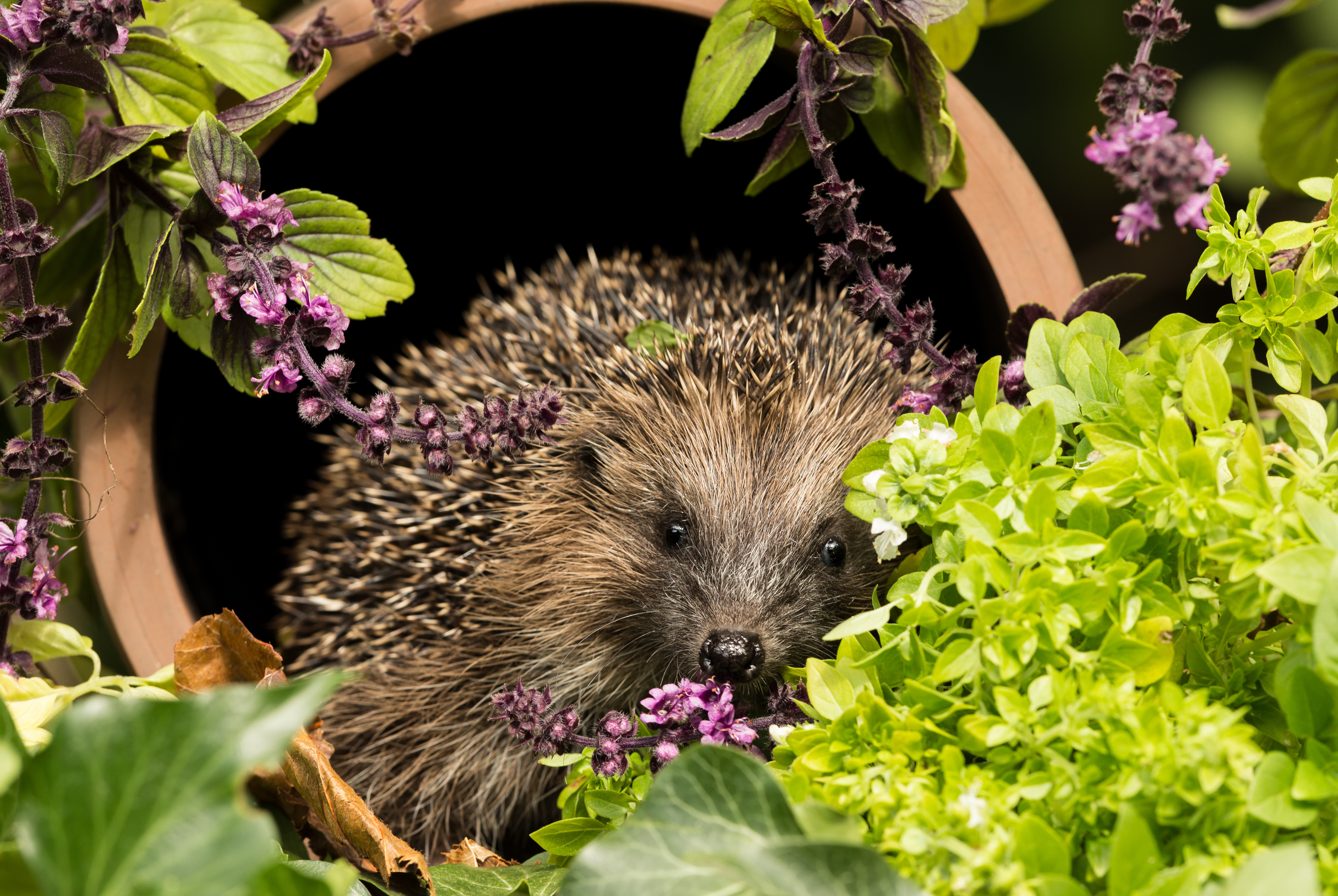 Simple ways to create a Wildlife-Friendly Garden  image