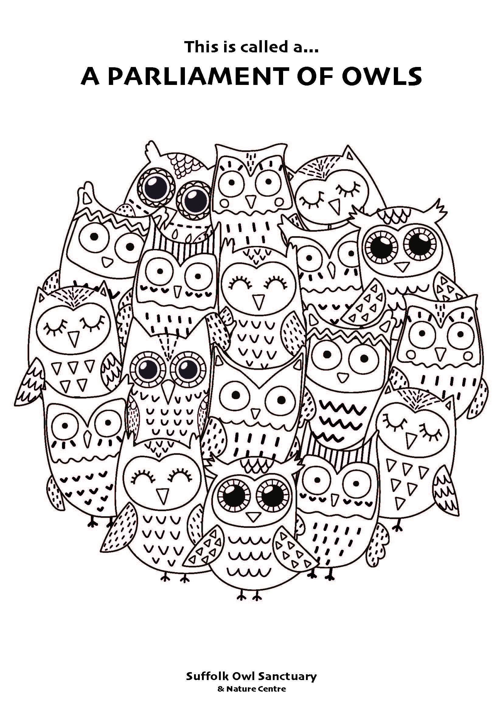 Owl Colouring In Activity Sheet  image