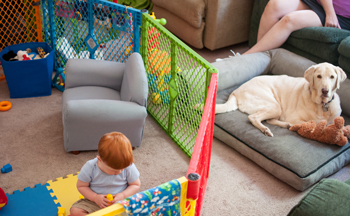 5 Top Tips for Successful Dog & Baby/Toddler Interactions  image