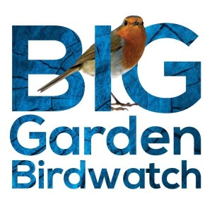 The Big Schools' Birdwatch: 5 Birds To Look Out For  image